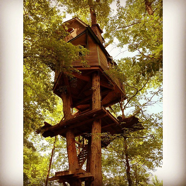 Tree housing.