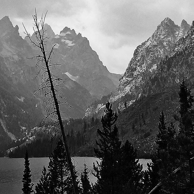 Gettin back to those roots #blackandwhite #grandteton #roadtrip